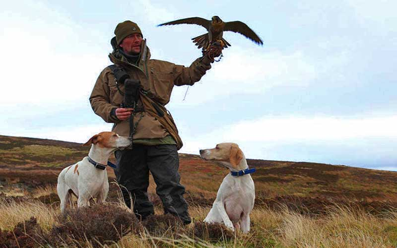 falconry-with-dogs for web